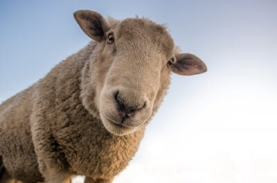 Five good reasons your website needs a sheepdog 2