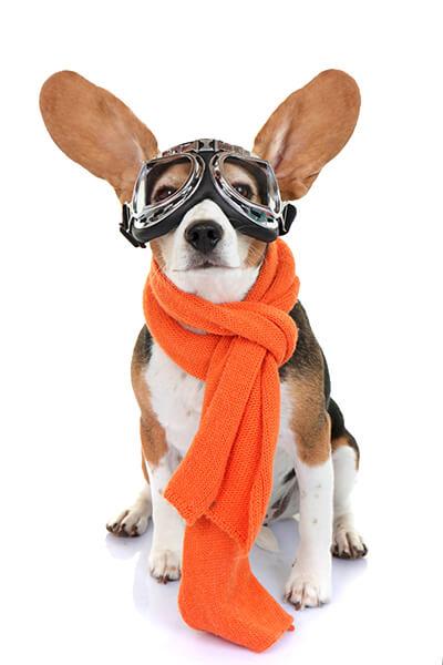 mission-dog
